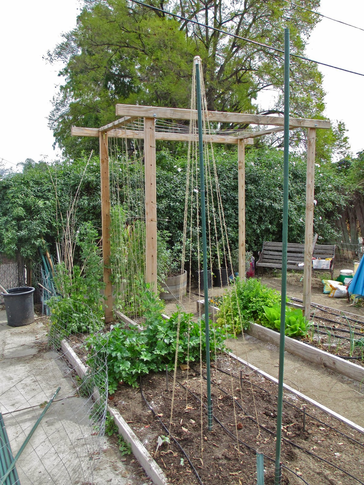 Andie S Way Trellis Ideas For Tomatoes Cucumbers Beans
