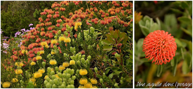 Les îles Scilly jardin de l'abbaye Tresco