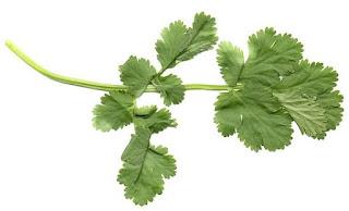 controversial comestibles: cilantro