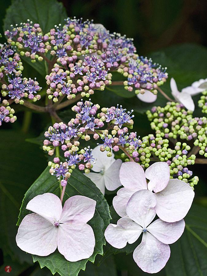 From The Garden Of Zen June 2011