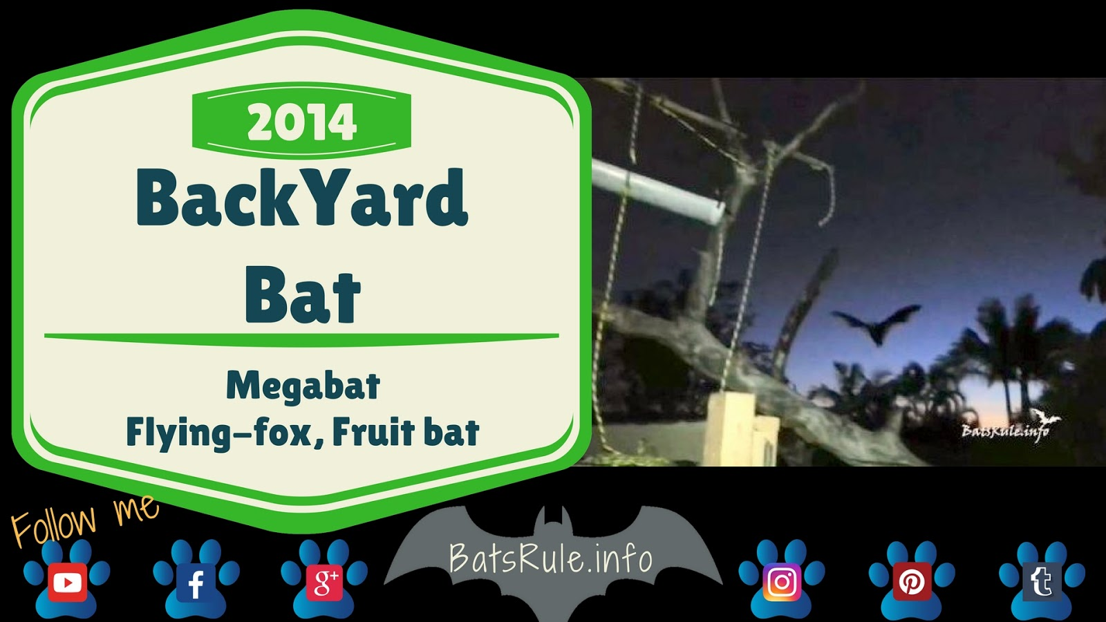 Back Yard   Megabat black Bat, Flying Fox, Fruit Bat
