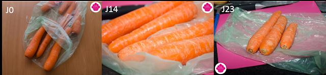 Test des Vegetabags avec des carottes pendant trois semaines