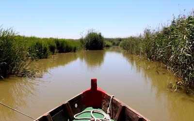 Paseo en barca por la Albufera-Valencia