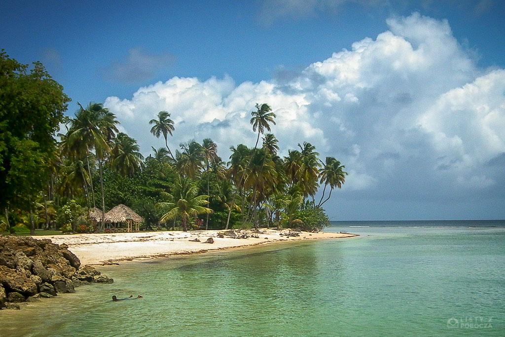 Palmy kokosowe na plaży w Store Bay na Tobago