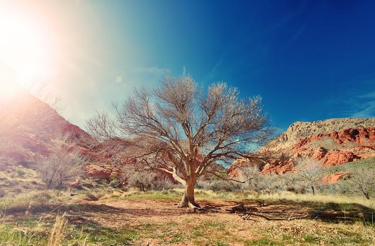 Sun Desert Dry Tree