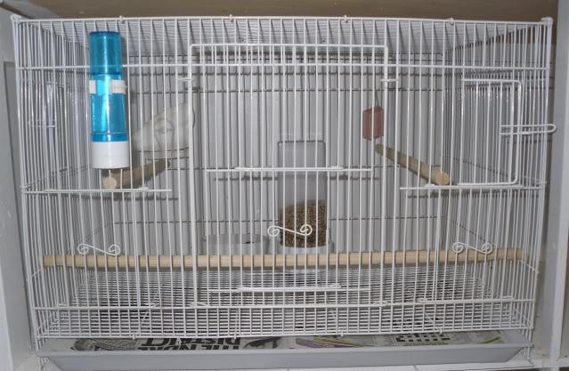Sangkat untuk Ternak Burung Parkit