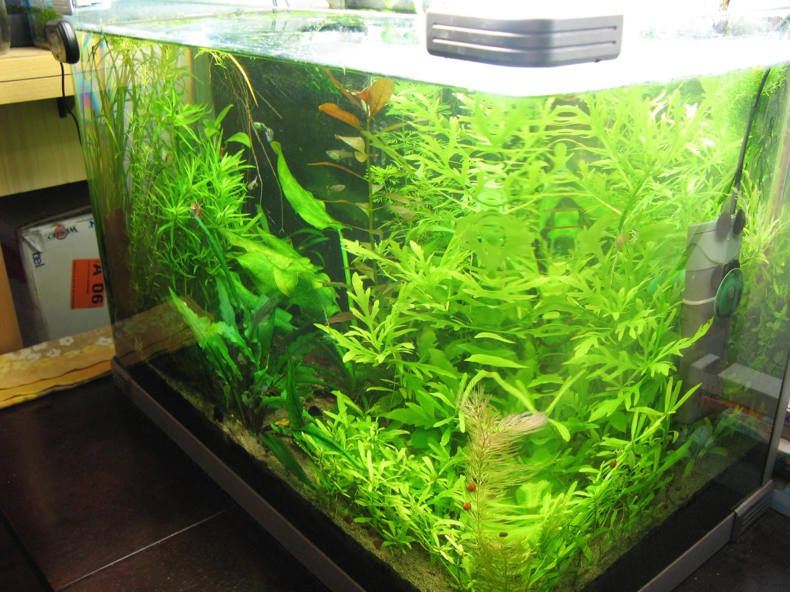 acquarilowcost quando usare la co2 in acquario vantaggi e