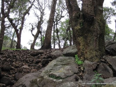 Cerro Viejo - A unos metros de la cima