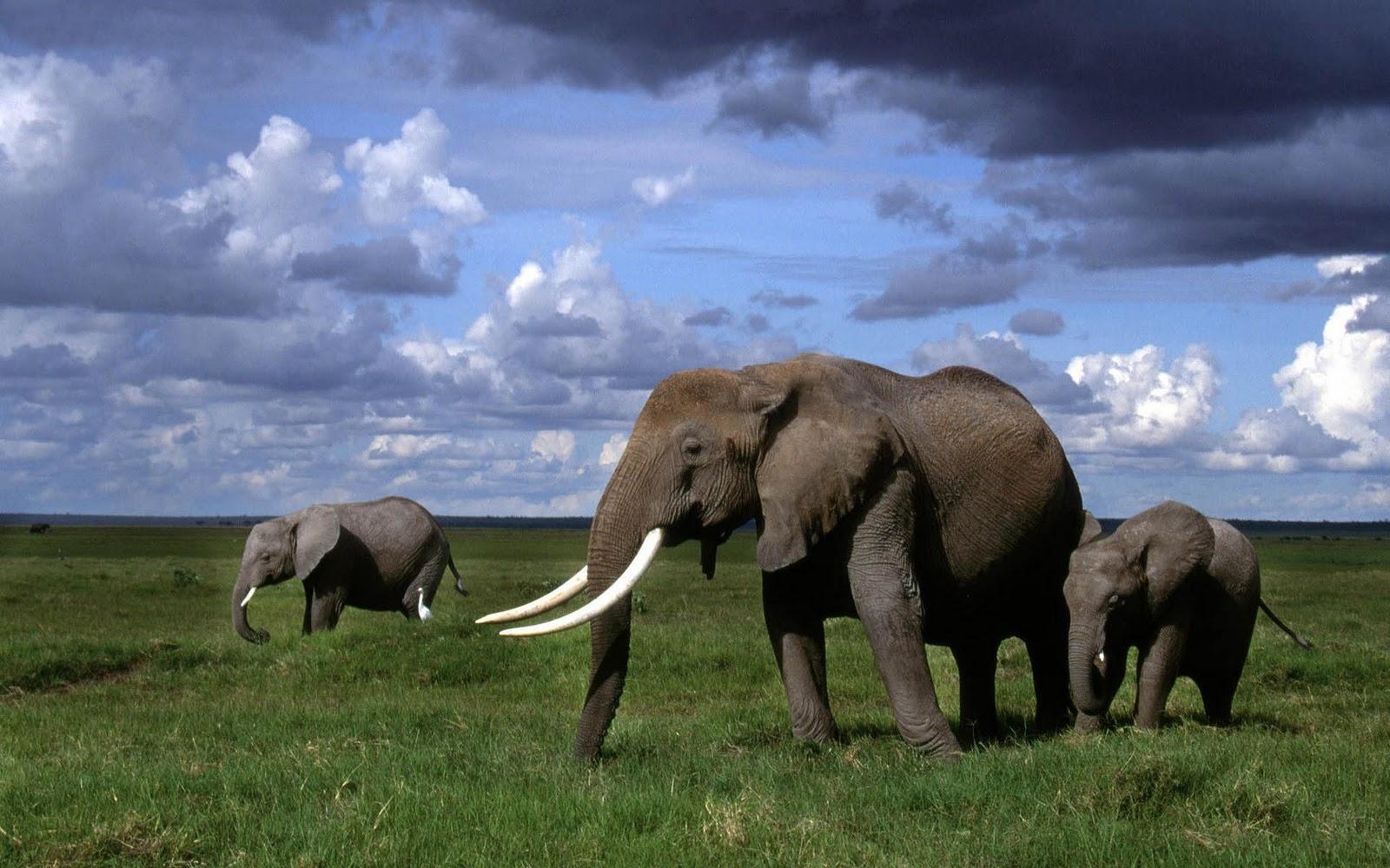 elephants wallpapers world - photo #6