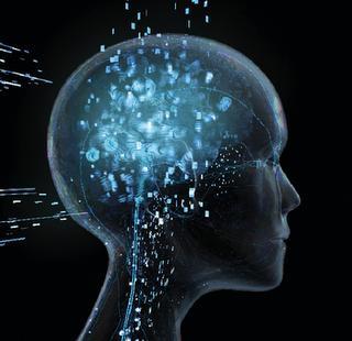 Neocortex: el cerebro racional