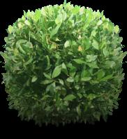arbusto em png