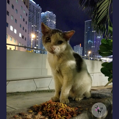 Miami community cats feral cats homeless pets