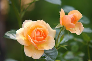 Bunga Sempurna dan Bunga Tidak Sempurna Beserta Contohnya