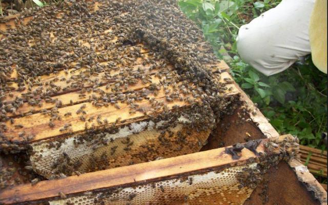 Επιθεώρηση μελισσιών χωρίς άνοιγμα της κυψέλης