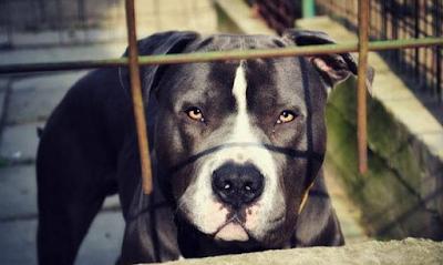 1bdfa6ba4fb Τα περιστατικά επιθέσεων σκύλων σε παιδιά (αλλά και σε ενήλικες) έχουν  γίνει καθημερινός εφιάλτης σε ολόκληρη την ...