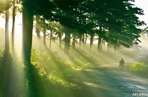 nắng trải bên hàng cây
