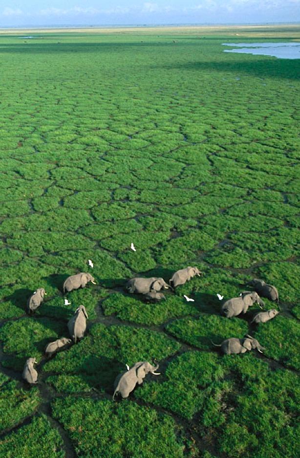 African wetland, Kenya