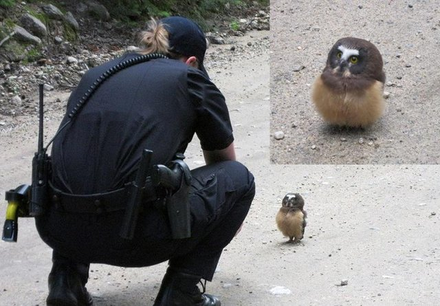 Police officer meets baby owl in Boulder, Colorado