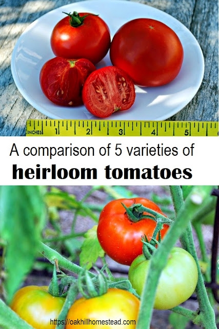 What's your favorite tomato variety? Here is a comparison of the heirloom varieties I'm growing this year.