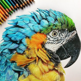 10-Blue-and-Gold Macaw-Tom-Strutton-Animal-Drawings-www-designstack-co