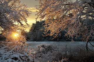 sunrise lights up snow covered trees