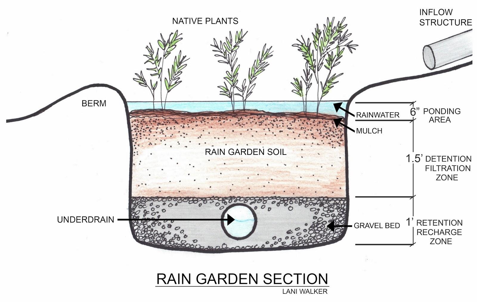 Salukitecture: Rain Gardens
