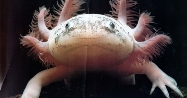 Sad Quotes Wallpapers In Urdu Mexican Axolotl Angelic Hugs