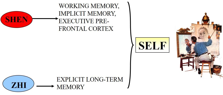 Maciocia Online Memory In Chinese Medicine