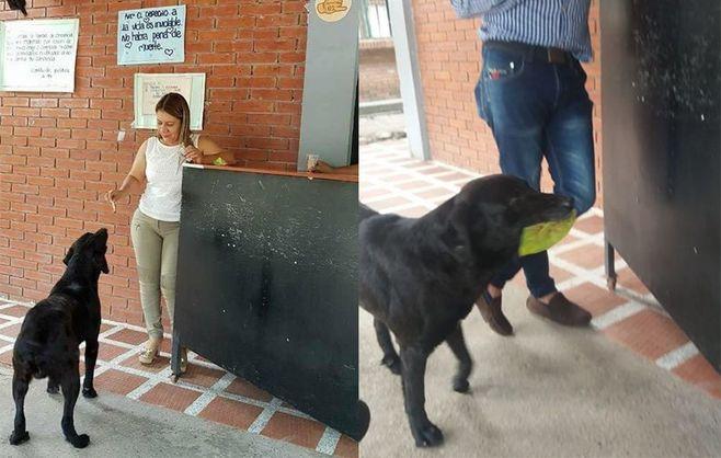 В Колубмбии уличный пес научился покупать себе еду