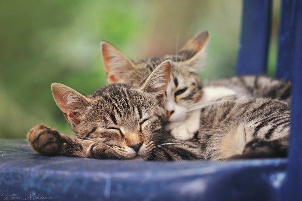 Zoran Milutinovic zoranphoto deviantart fotografia gatos fofos bichanos meigos gatinhos fofura animais estimação