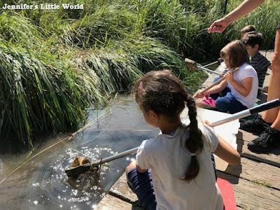 WWT Arundel Wetland Centre