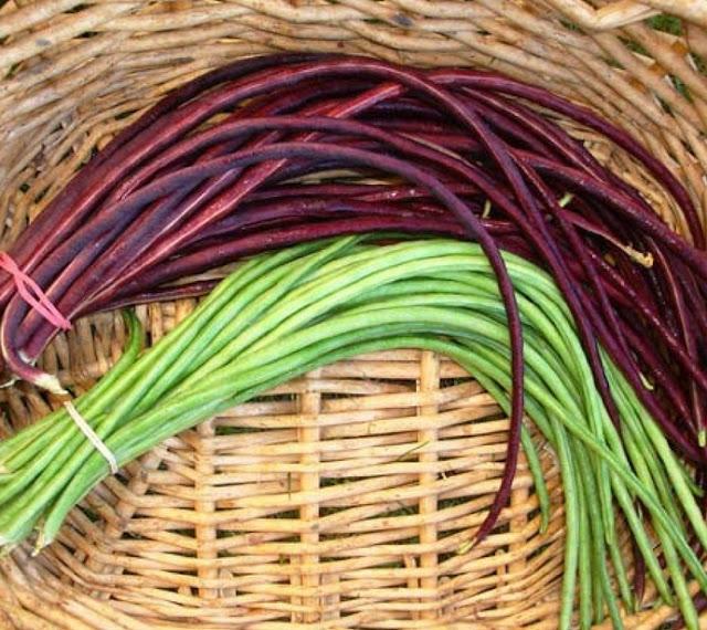 Cách trồng Đậu đũa và trồng Đậu đũa tại nhà