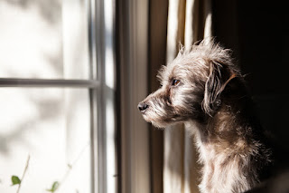 A dog looks out of the window looking sad
