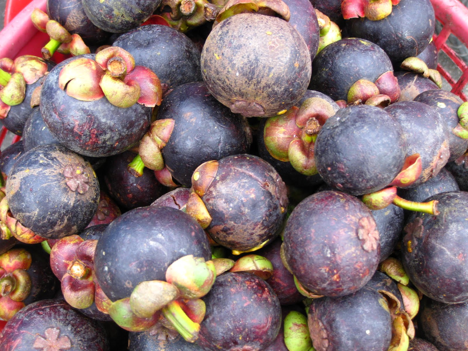 Trunks Up!: Thailand's Exotic Fruits