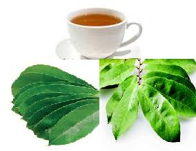 Daun sirsak memanglah sudah dikenal mempunyai banyak sekai manfaat  Manfaat daun sirsak untuk obat herbal lemah jantung