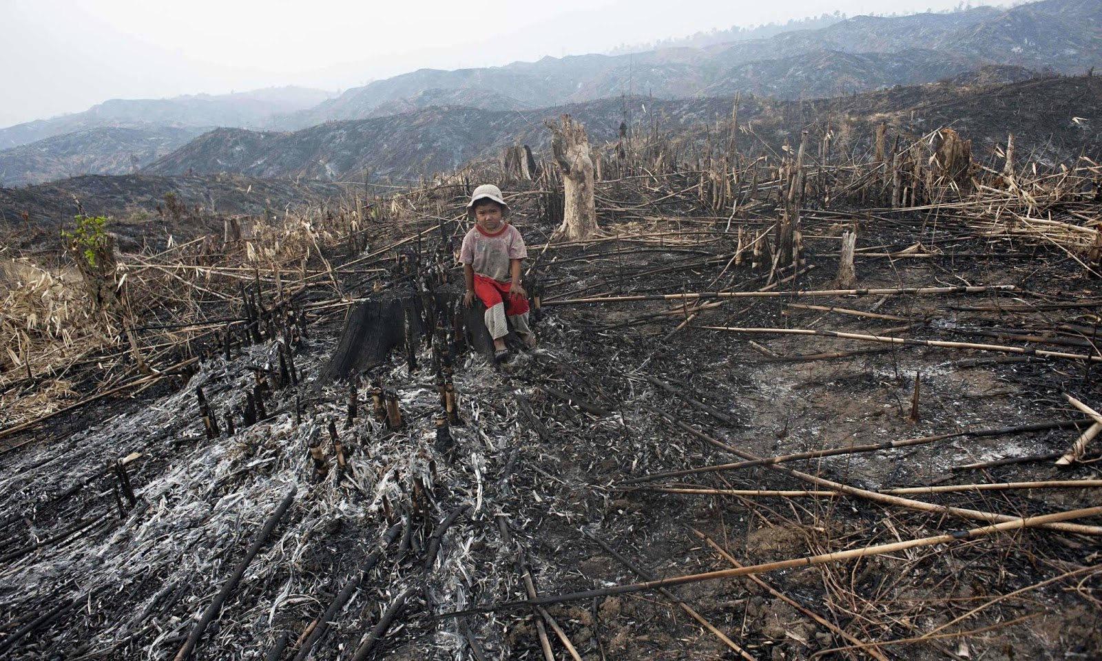 Deforestation – effects on Air Pollution