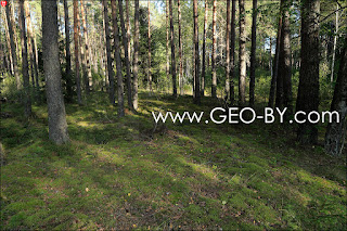The place where there was the settlement Bliźnięta (Twins). Path to another former settlement
