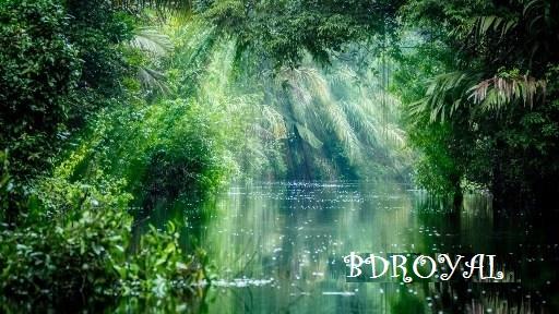 বাংলাদেশের আমাজন ফরেস্ট রাতারগুল, Ratargul Swamp Forest,