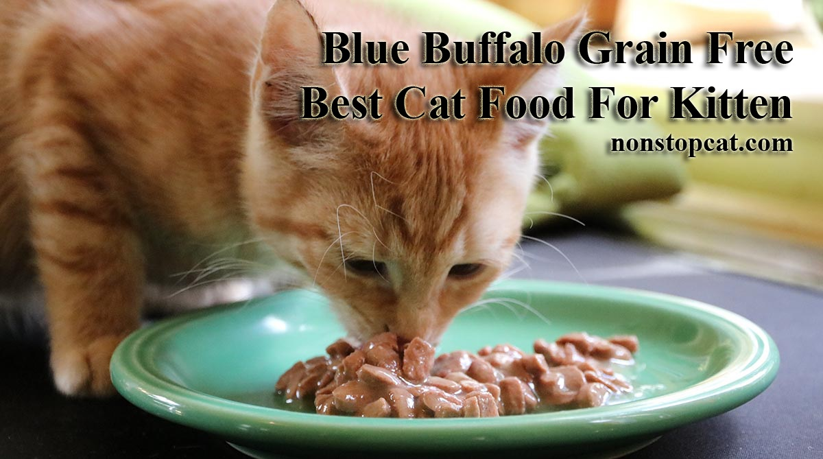 Blue Buffalo Kitten Food Reviews