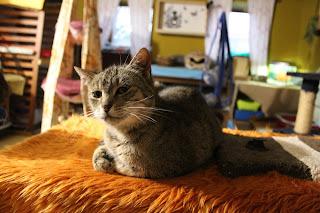 velká černá kočička 2014