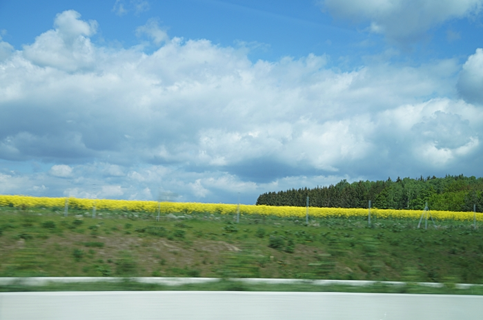 Blau-weißer Himmel über Rapsfeld   Tasteboykott Blog