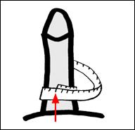 قياس عرض القضيب