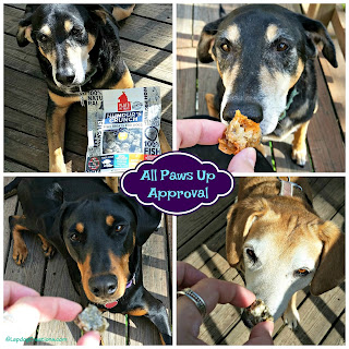 3 rescue mixed breed dogs Hundurs Crunch fish treats