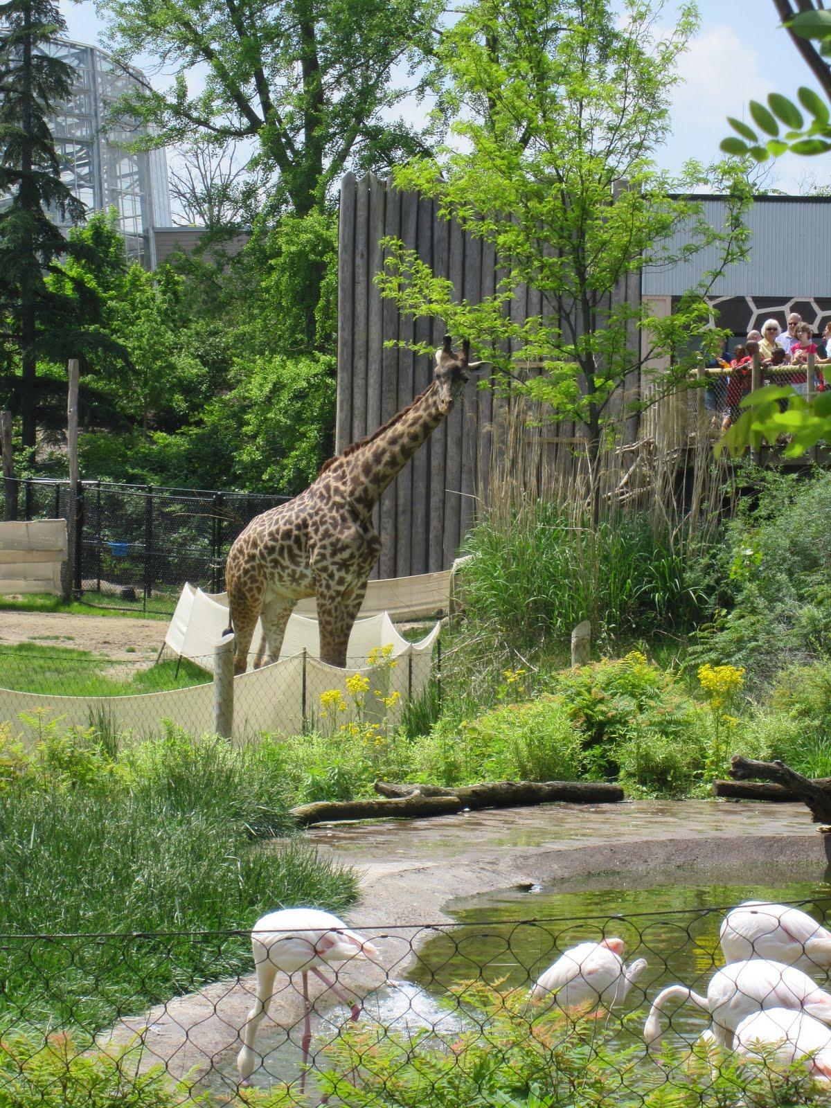 Queen City Yam Cincinnati Zoo And Botanical Gardens