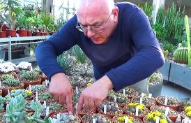 чему нас учит растение Lithops, цветущее только на этой неделе