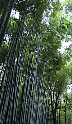 bosque-arashiyama-kyoto