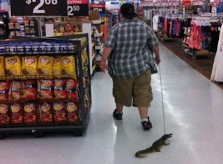 Meanwhile at Walmart Pet Crocodile