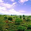 Menyusuri Keindahan Taman Bunga Nusantara
