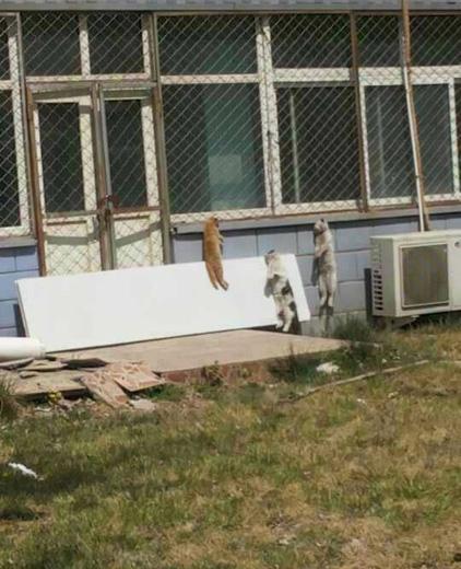 Phẫn nộ trước hình ảnh xưởng chế tạo thuốc treo cổ mèo lủng lẳng