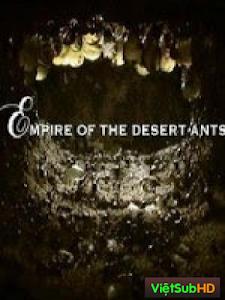 Đế chế của loài kiến sa mạc